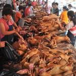 عکس غذای تهوع آور اما محبوب چینی ها